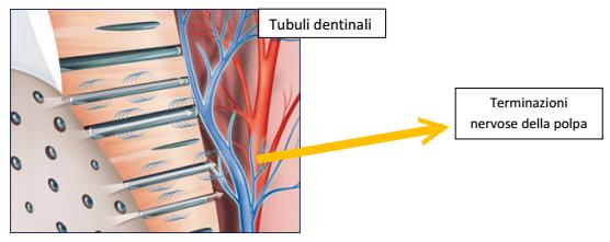 dentisensibili-4